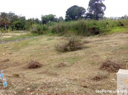 terrain constructible immobilier terrain guadeloupe