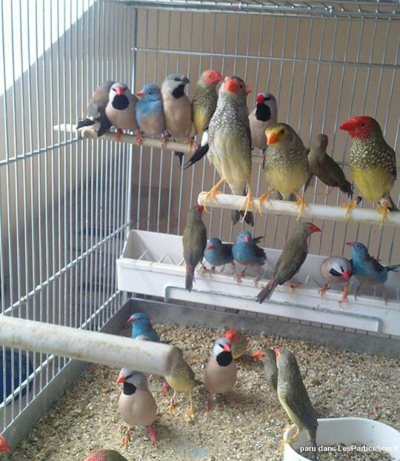 oiseaux exotiques et accessoire d 39 levage animaux nord. Black Bedroom Furniture Sets. Home Design Ideas