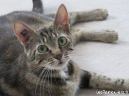 meldy 2 ans animaux chat paris