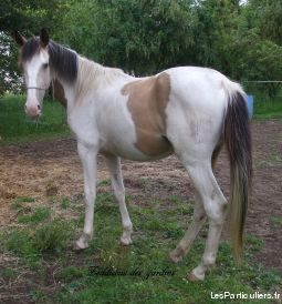 hongre pie isabelle (ou �change)  animaux cheval poney seine-maritime