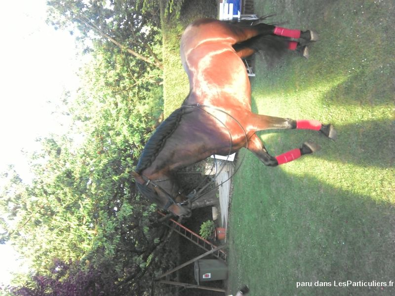 propose 1 / 2 pension sur cheval pre animaux cheval poney val-d'oise