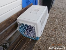 caisse transport chat animaux services accessoires animaux gironde