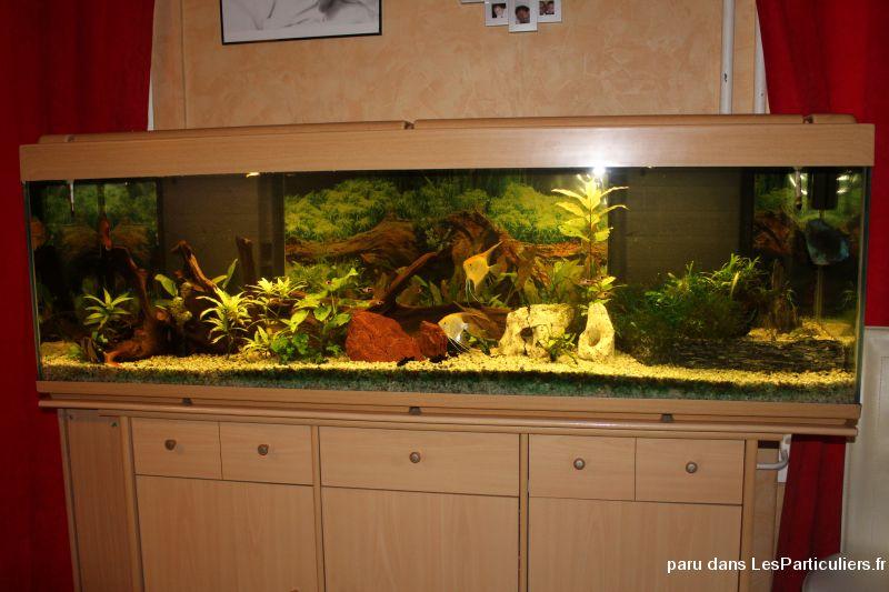 Aquarium complet animaux rh ne for Vente aquarium complet