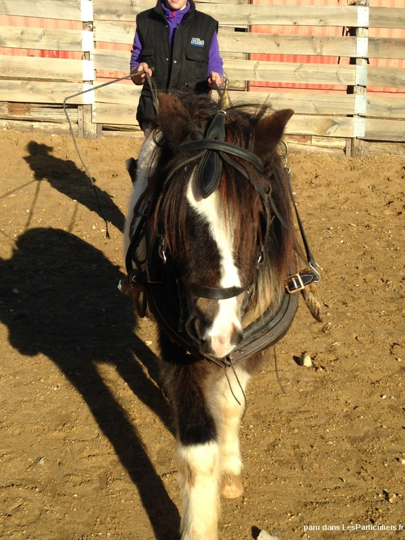 poney 4 ans pie noir animaux cheval poney gard