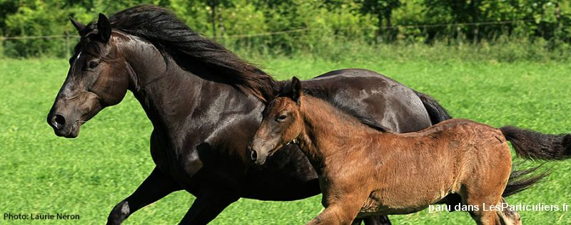 propose chevaux poneys ânes à l'adoption animaux cheval poney nord