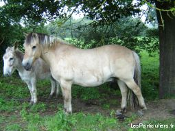 cheval animaux cheval poney aisne