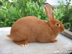 lapin animaux rongeur aube