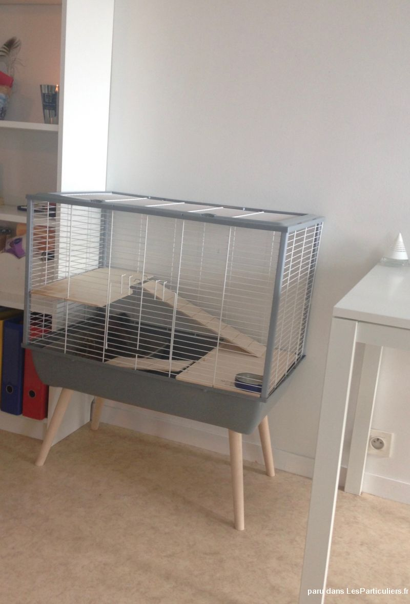 lapin angora extra nain avec sa cage sur pieds animaux finistre. Black Bedroom Furniture Sets. Home Design Ideas