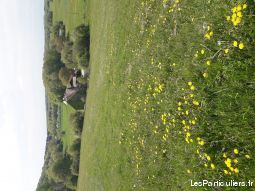pension chevaux animaux cheval poney doubs