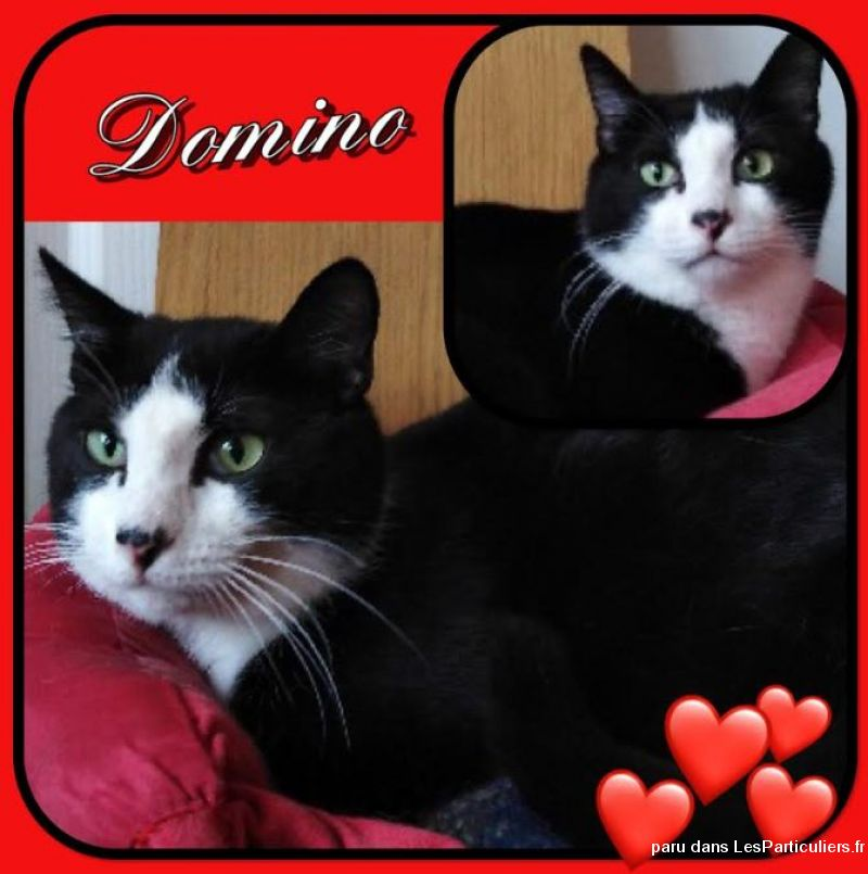 Domino Animaux Chat Val-d'Oise