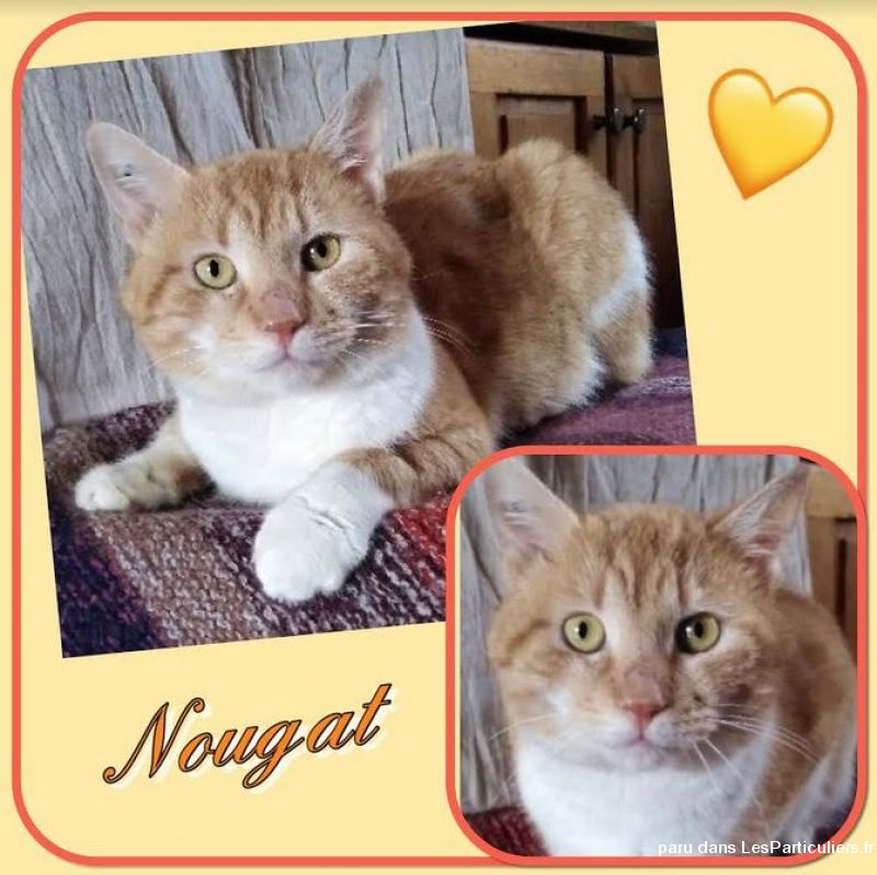 Nougat Animaux Chat Val-d'Oise