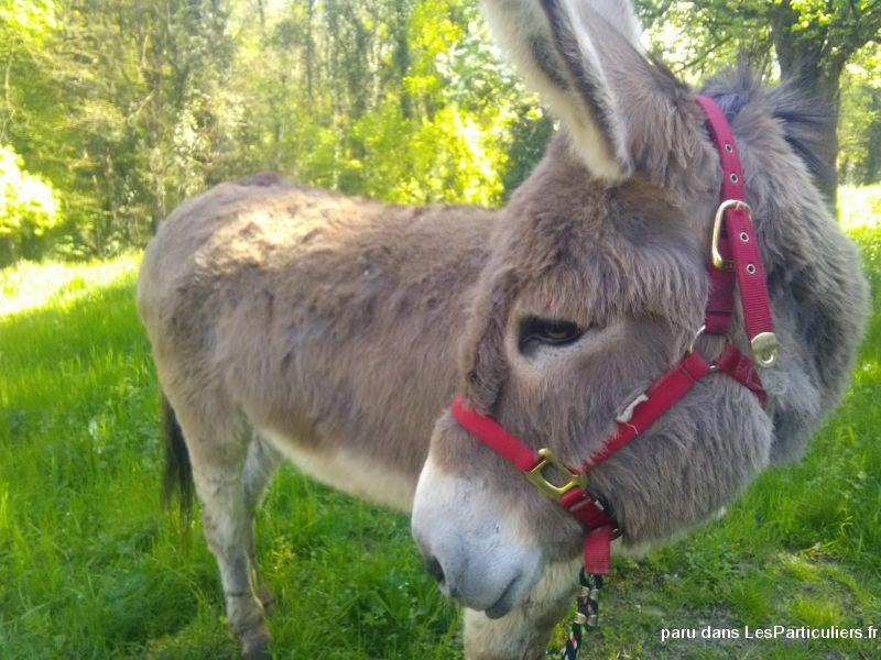 Petites Annonces Gratuites Animaux Cheval Poney